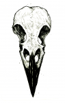 Raven Skull for Robin 2015